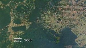 File:Amazon Deforestation in Rondonia, Brazil.ogv