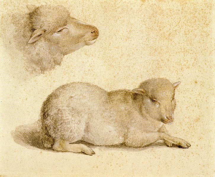 File:Resting Lamb and Head of a Lamb, by Hans Holbein the Younger.jpg