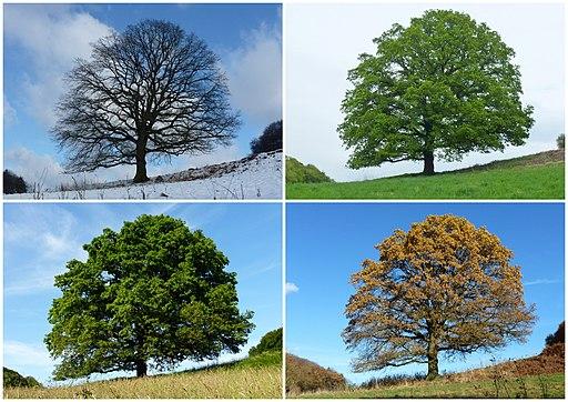 Bäume Jahreszeit 2013