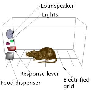 Wikipedia image of Skinner box
