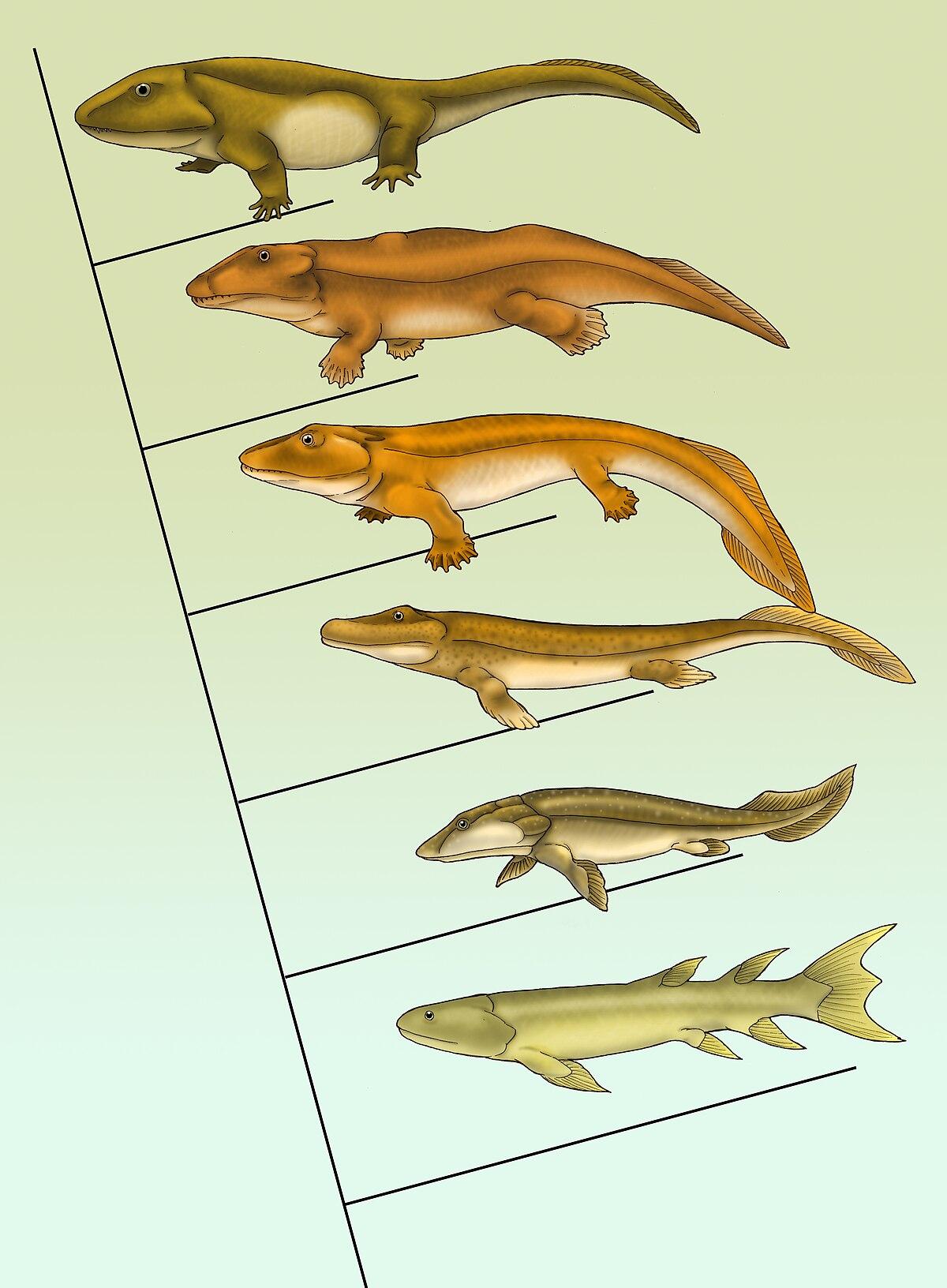 Fishapod evolution.jpg