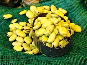 English: Fresh fava beans for sale at the mark...