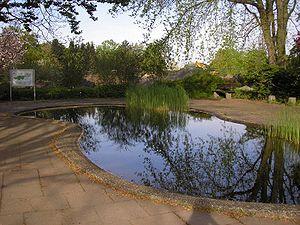 Froschteich im Botanischen Garten der Universi...
