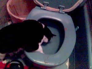 Toilet drinker.