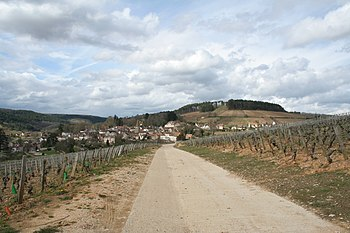 French wine region of the Cote de Nuits in Bur...