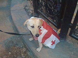 Dog Wear the flag of Georgia.