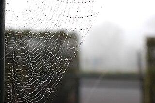 Im Spinnenenetz auf Verbrecherjagd