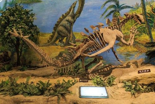 Zigong Dinosaur Museum Gigantspinosaurus.jpg