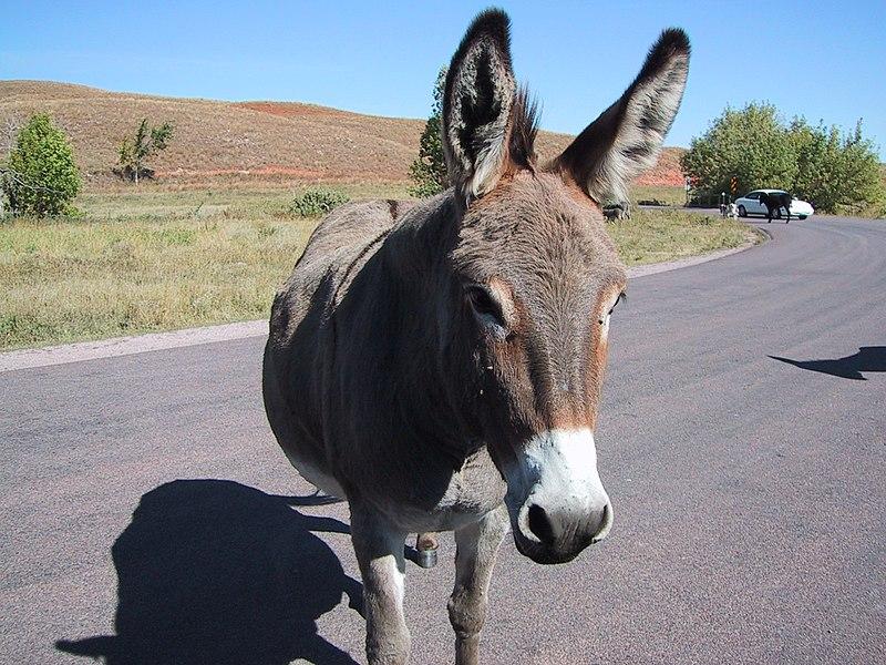 File:Donkey-01.jpg