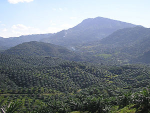 View of palm oil plantation in Cigudeg, Bogor