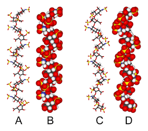 Two different structures of heparin