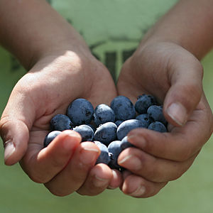 Back to our favourite blueberry picking spot, ...