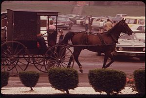 AMISH HORSE AND BUGGY IN A MIDDLEFIELD SHOPPIN...