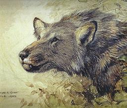 Borophagus, el antepasado del perro. Hoy tan solo es otro fósil del Mioceno.