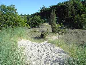 Forest growing on dunes at Indiana Dunes State...