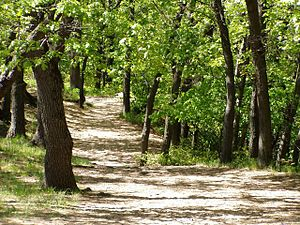 English: Trail No. 4, Indiana Dunes State Park