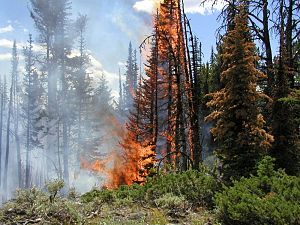English: A fire in Yellowstone, Wyoming, Unite...