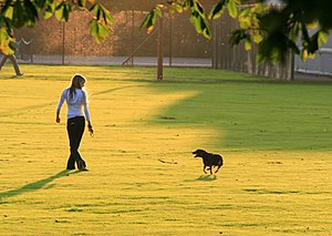 English: Dog walking in West Park