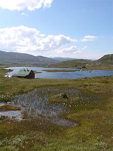 Hardangervidda im Sommer