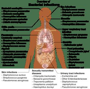 Bacteria - Wikipedia