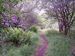 English: Fairy footpath? I walk this footpath ...