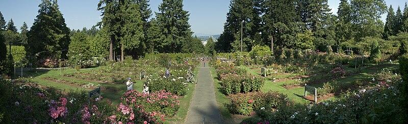File:International Rose Test Garden  pano.jpg