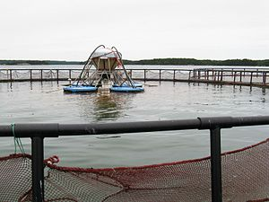 English: Salmon farm in the archipelago of Fin...