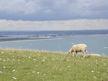 English: Purbeck Hills. Eastern end of the Pur...