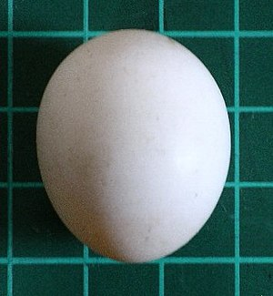 Photo taken by me. The egg was removed from a ...