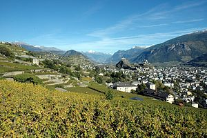 Sion and its vineyards