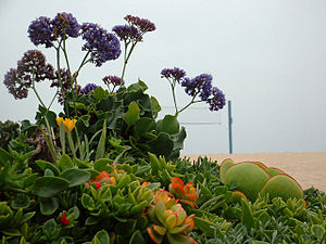 English: Coastal landscaping on the beaches of...