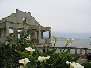 Alcatraz Island Flowers