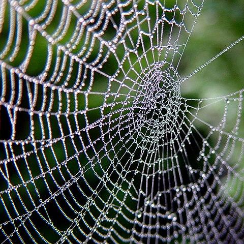 toiles d'araignées sur les caméras de surveillance