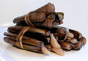 English: Razor clams. Español: Navajas.