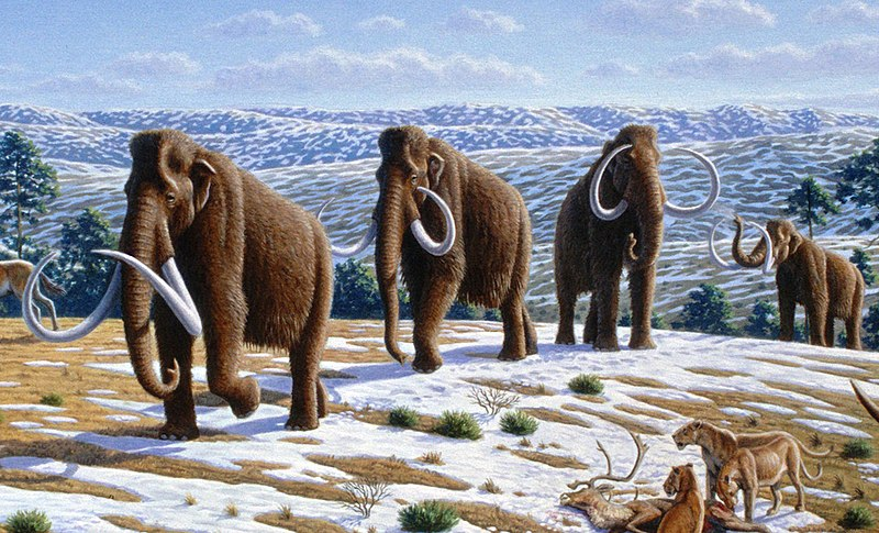 File:Woolly mammoth (Mammuthus primigenius) - Mauricio Antón.jpg