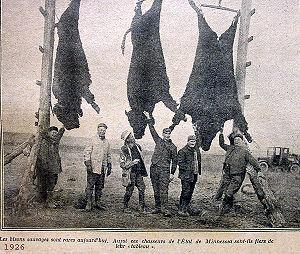En 1926, des chasseurs du Minnesota sont encore fiers de leurs dernières prises, alors que l'espèce est menacée dans cet État.
