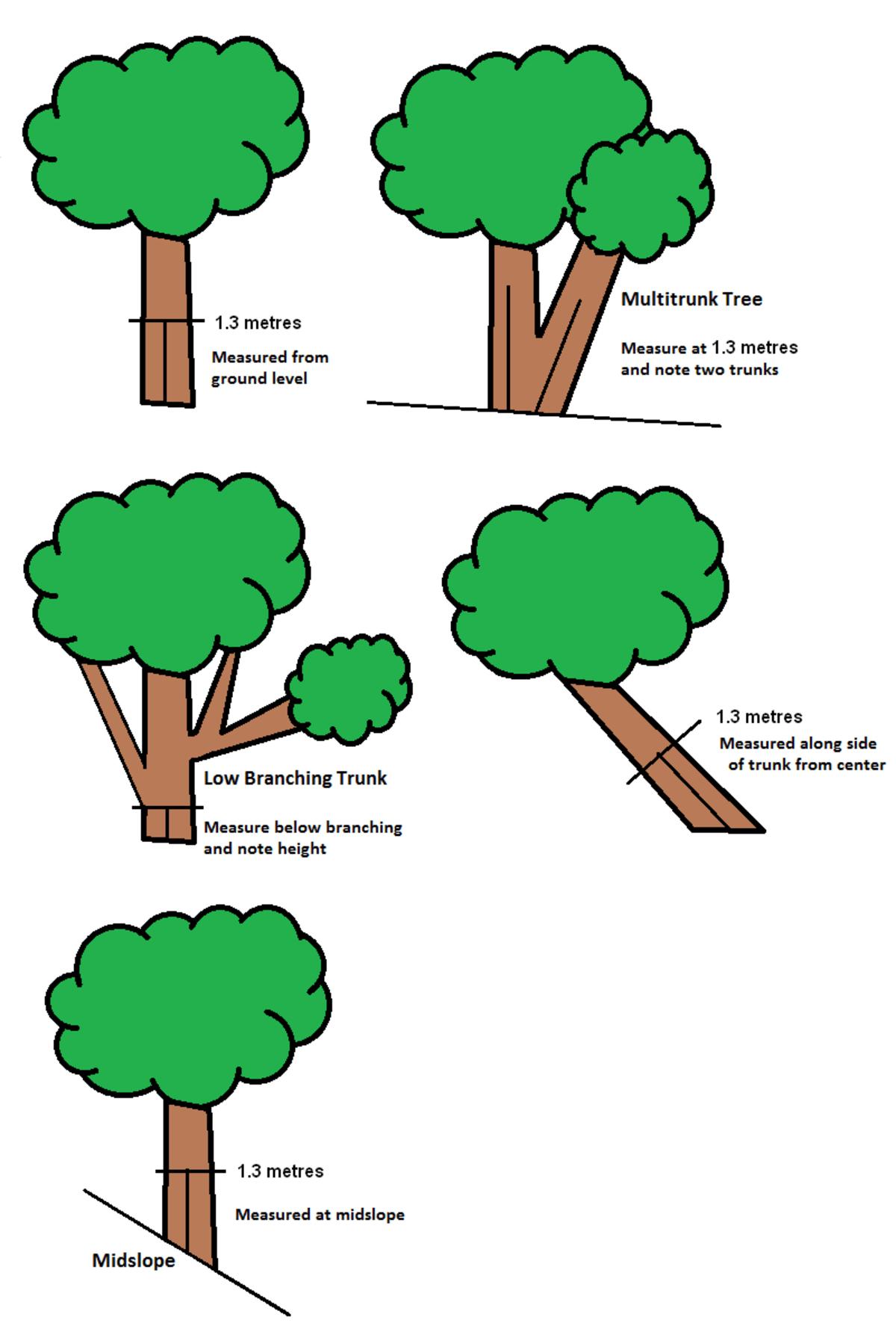 Tree Girth Measurement