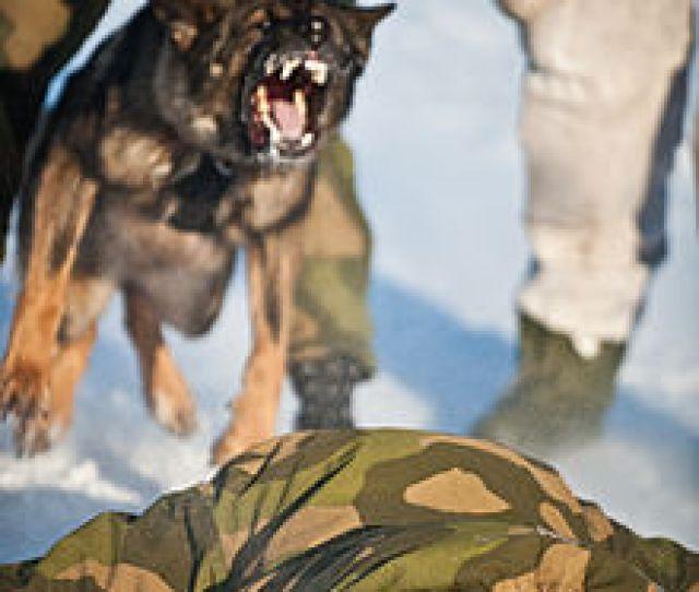 Dogs In Warfare