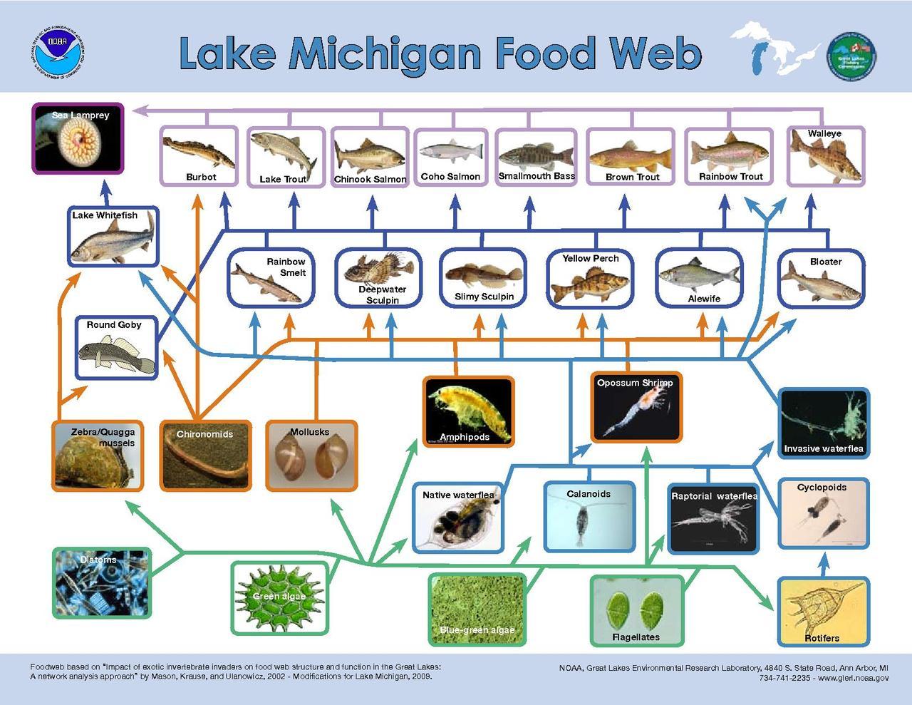File Lake Michigan Food Web
