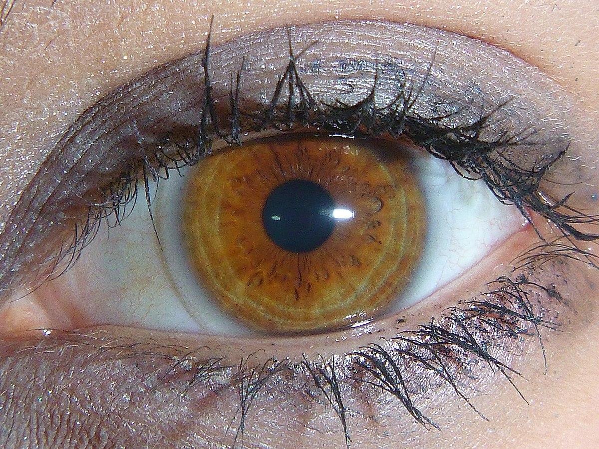 Ficheiro Light Brown Amber Eye Wikipedia A Enciclopedia Livre