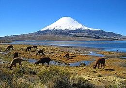 Resultado de imagen para Estepa Puneña o Desierto andino