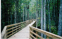 Boardwalk on the Wolf River in the William B. ...