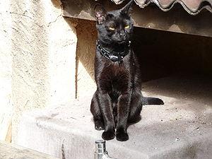 "A black cat in the city of ""La Garde""..."