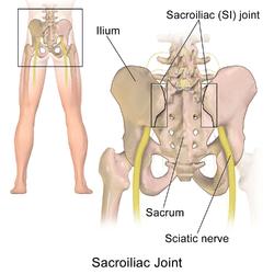 Sacroiliac joint  Wikipedia