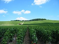 Viñedo francia es el segundo productor de vino mundial.