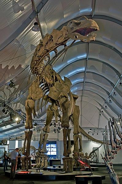 File:Argentinosaurus DSC 2943.jpg
