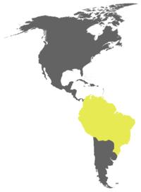 Peta distribusi hering berkepala kuning besar.[1]