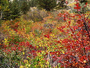 :Fall colors, Poudre Canyon, Colorado