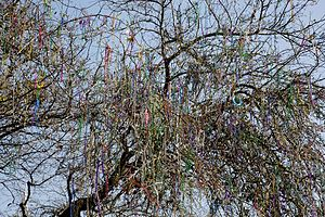 English: Mardi Gras beads hang in a tree for w...