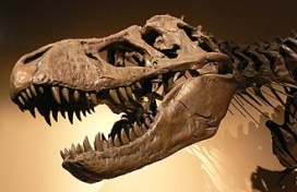 Palais de la Decouverte Tyrannosaurus rex p1050042.jpg